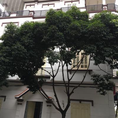 Nhà 4 tầng Lô 22 Lê Hồng Phong, P Đông Khê, Q Ngô Quyền, Hải Phòng